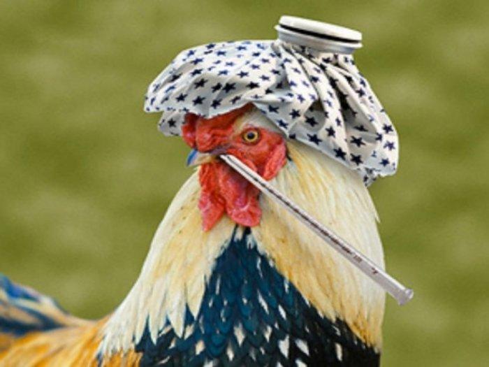 РФможет временно ограничить поставки птицеводческой продукции изПольши