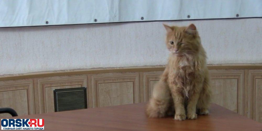 Работники милиции Гая спасли кота исон граждан дома поулице Декабристов