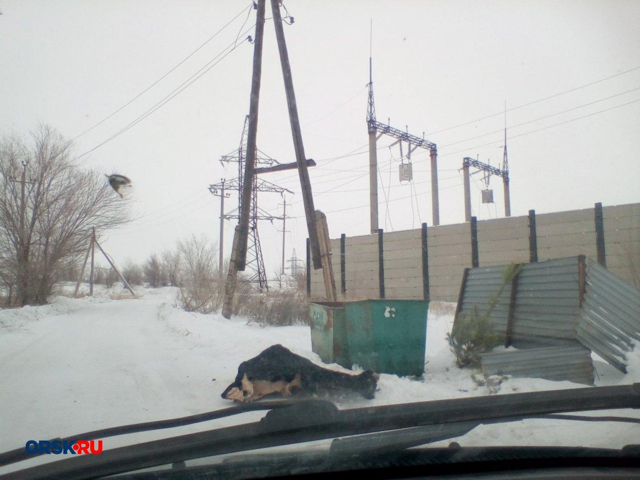 В посёлке Первомайском на дороге лежит труп коровы