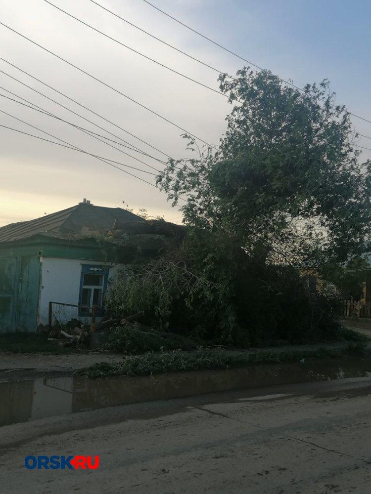 В Орске упавшее дерево оставило без света целый район
