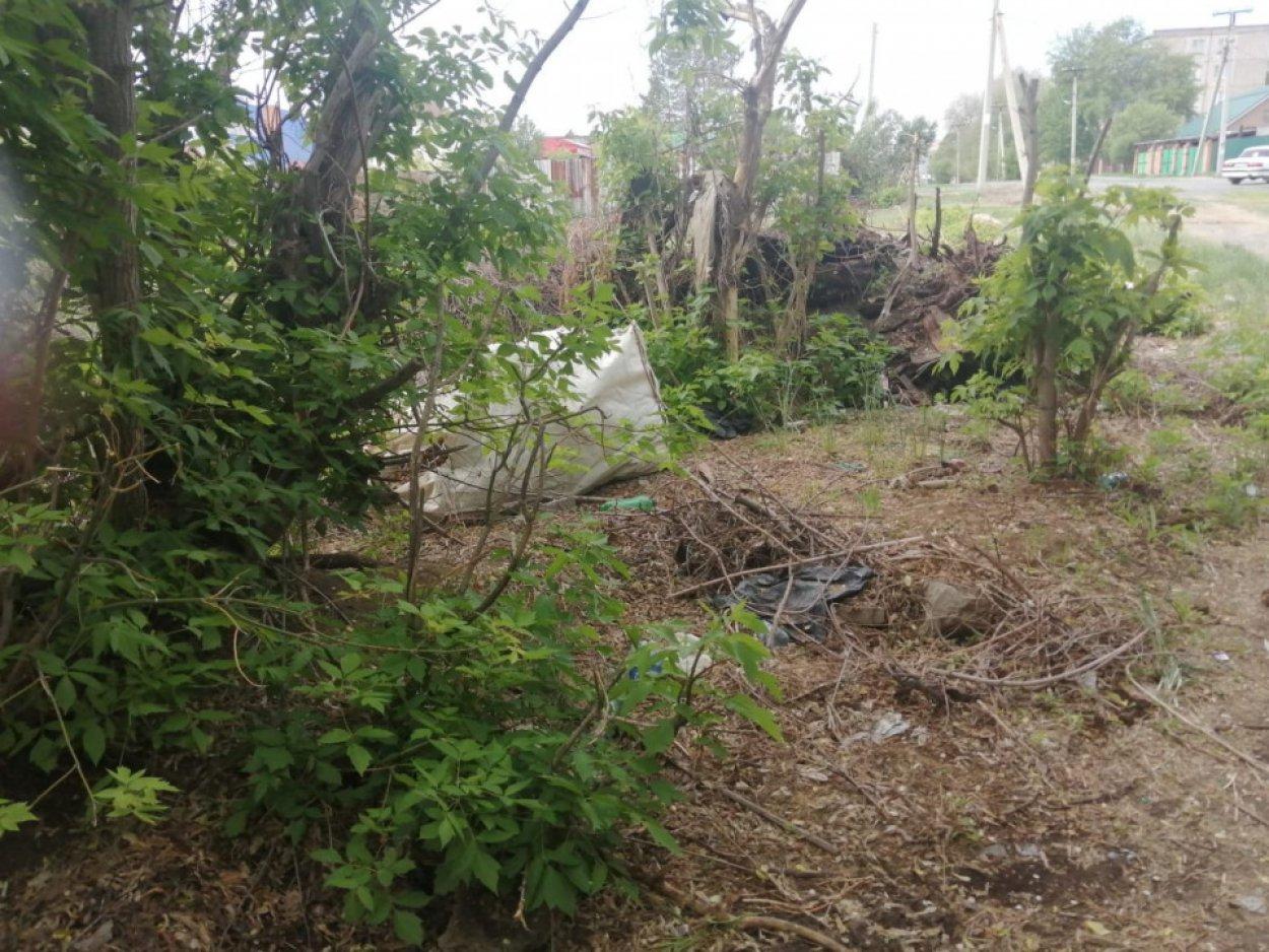 Прибрежную зону реки Елшанка очистили от мусора